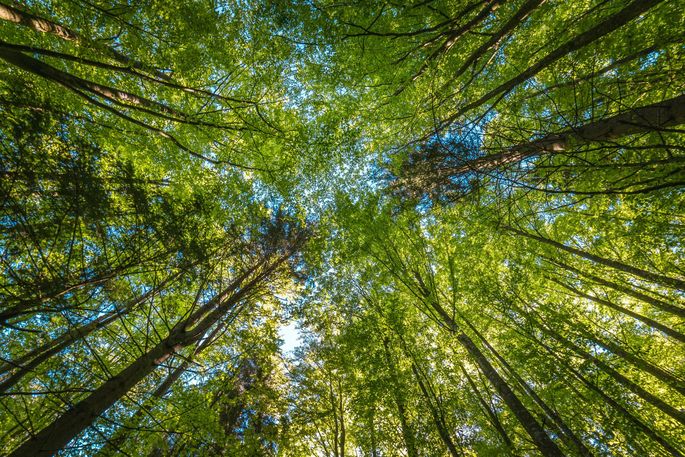 Le climat, les ressources naturelles et l'environnement
